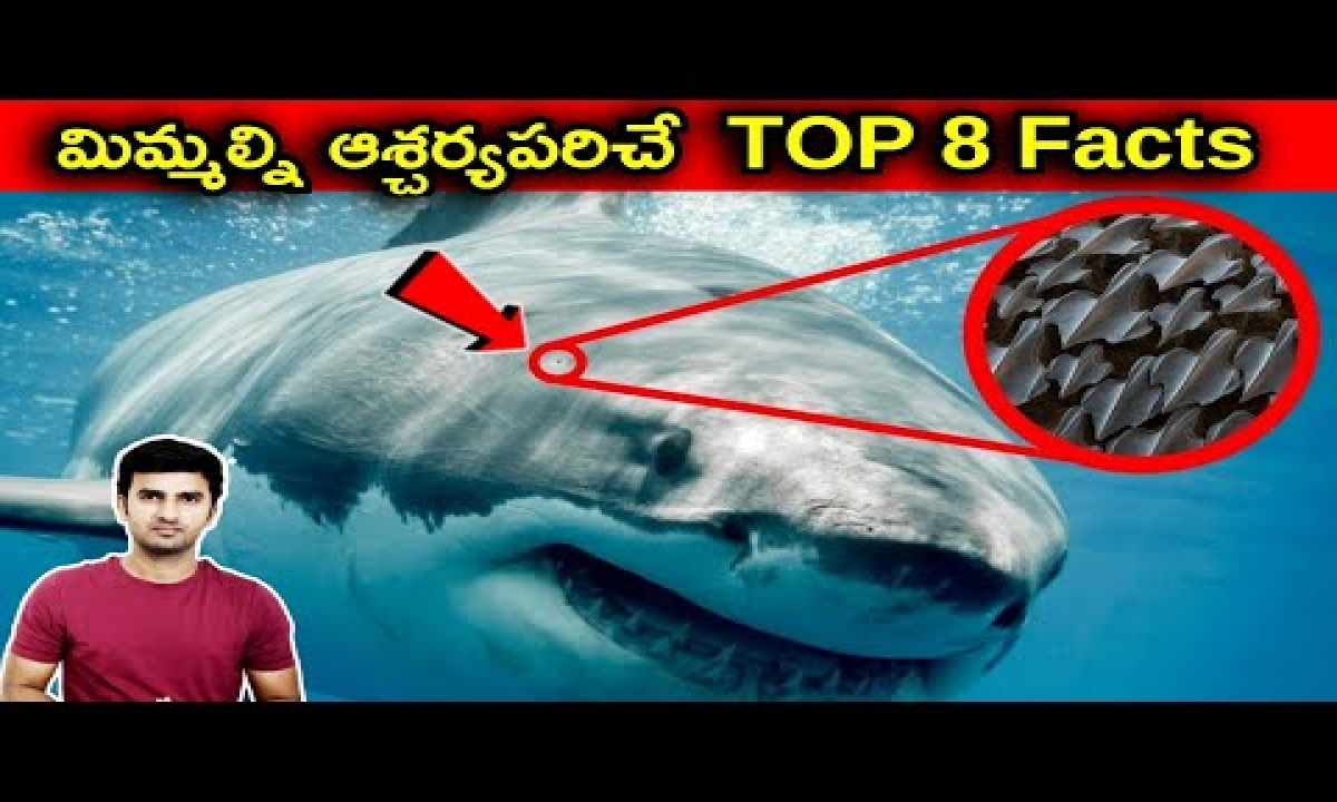 Technologies Which Human Copied From Nature |Telugu Facts |-Technologies Which Human Copied From Nature Telugu Facts -Telugu Trending Viral Videos-Telugu Tollywood Photo Image-TeluguStop.com