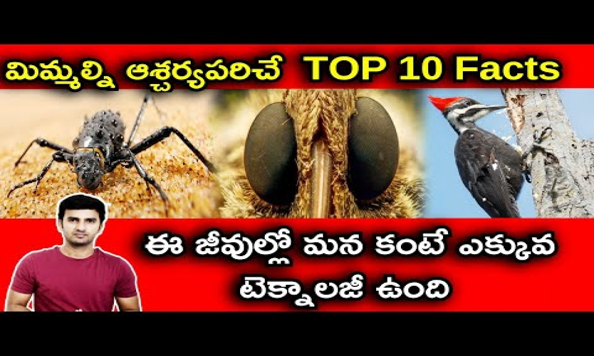 TOP 10 Interesting Facts In Telugu  Telugu Facts  -TOP 10 Interesting Facts In Telugu Telugu Facts -Telugu Trending Viral Videos-Telugu Tollywood Photo Image-TeluguStop.com