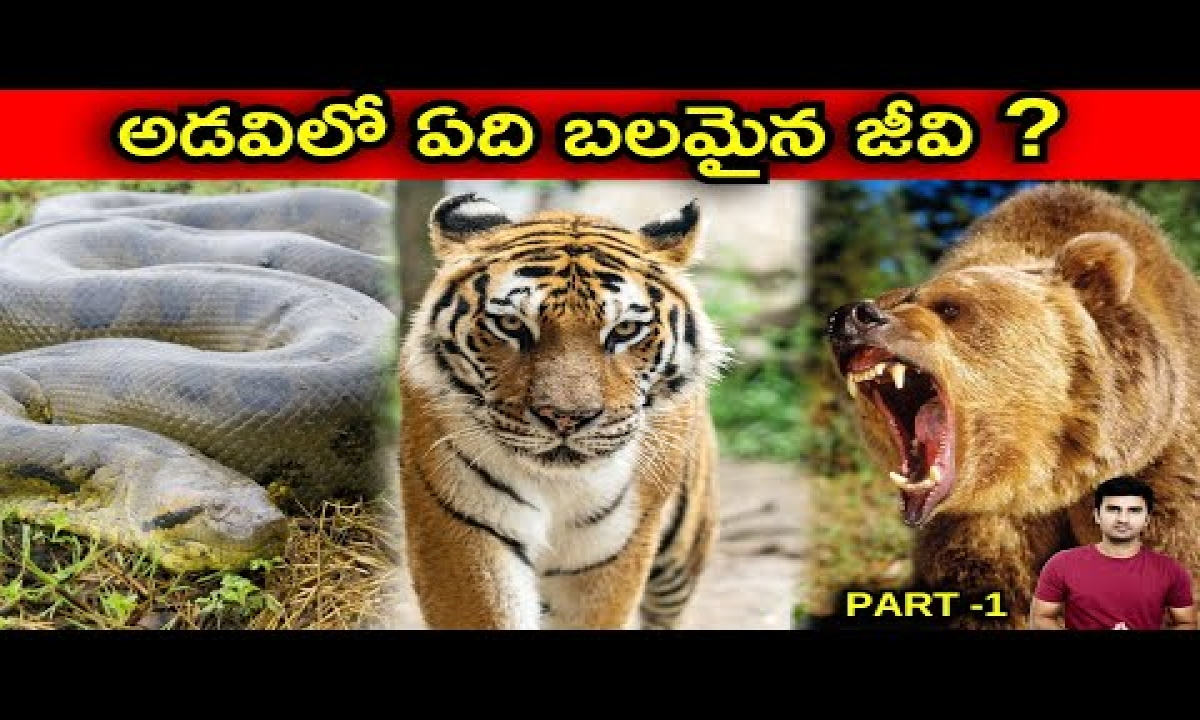 Strongest Animal In The World Explained In Telugu  Telugu Facts  -Strongest Animal In The World Explained In Telugu Telugu Facts -Telugu Trending Viral Videos-Telugu Tollywood Photo Image-TeluguStop.com