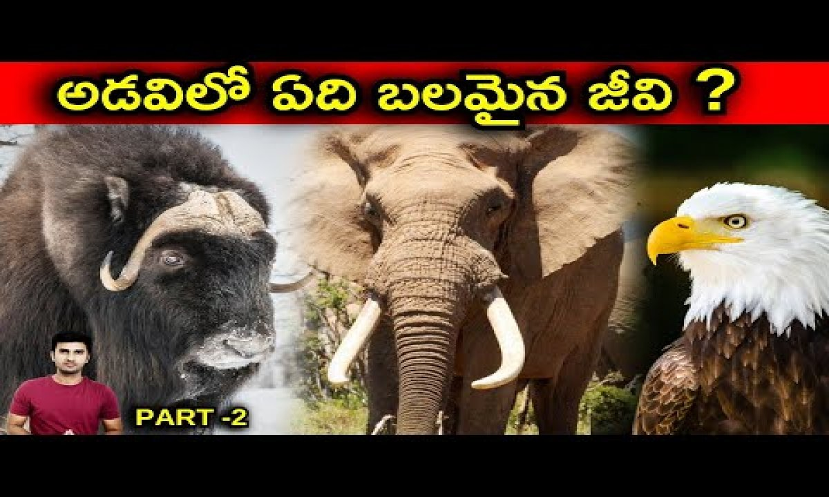 Strongest Animal In The World Explained In Telugu |Telugu Facts | PART -2|-Strongest Animal In The World Explained In Telugu Telugu Facts PART -2-Telugu Trending Viral Videos-Telugu Tollywood Photo Image-TeluguStop.com