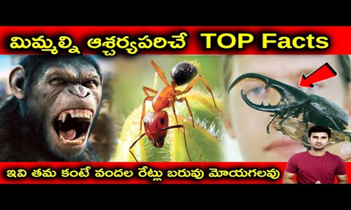 Interesting Facts About Animals Explained In Telugu  Telugu Facts  -Interesting Facts About Animals Explained In Telugu Telugu Facts -Telugu Trending Viral Videos-Telugu Tollywood Photo Image-TeluguStop.com
