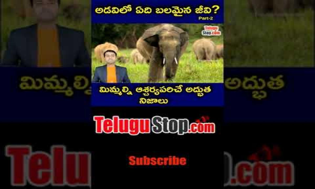 Interesting Facts About Animals Explained In Telugu Telugu Facts -Telugu Trending Viral Videos-Telugu Tollywood Photo Image-TeluguStop.com