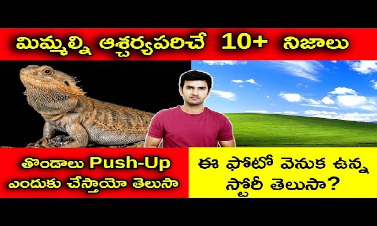 Top Interesting Facts In Telugu | తొండలు Push-Ups ఎందుకు చేస్తాయో తెలుసా | Telugu Facts-Top Interesting Facts In Telugu తొండలు Push-Ups ఎందుకు చేస్తాయో తెలుసా Telugu Facts-Telugu Trending Viral Videos-Telugu Tollywood Photo Image-TeluguStop.com