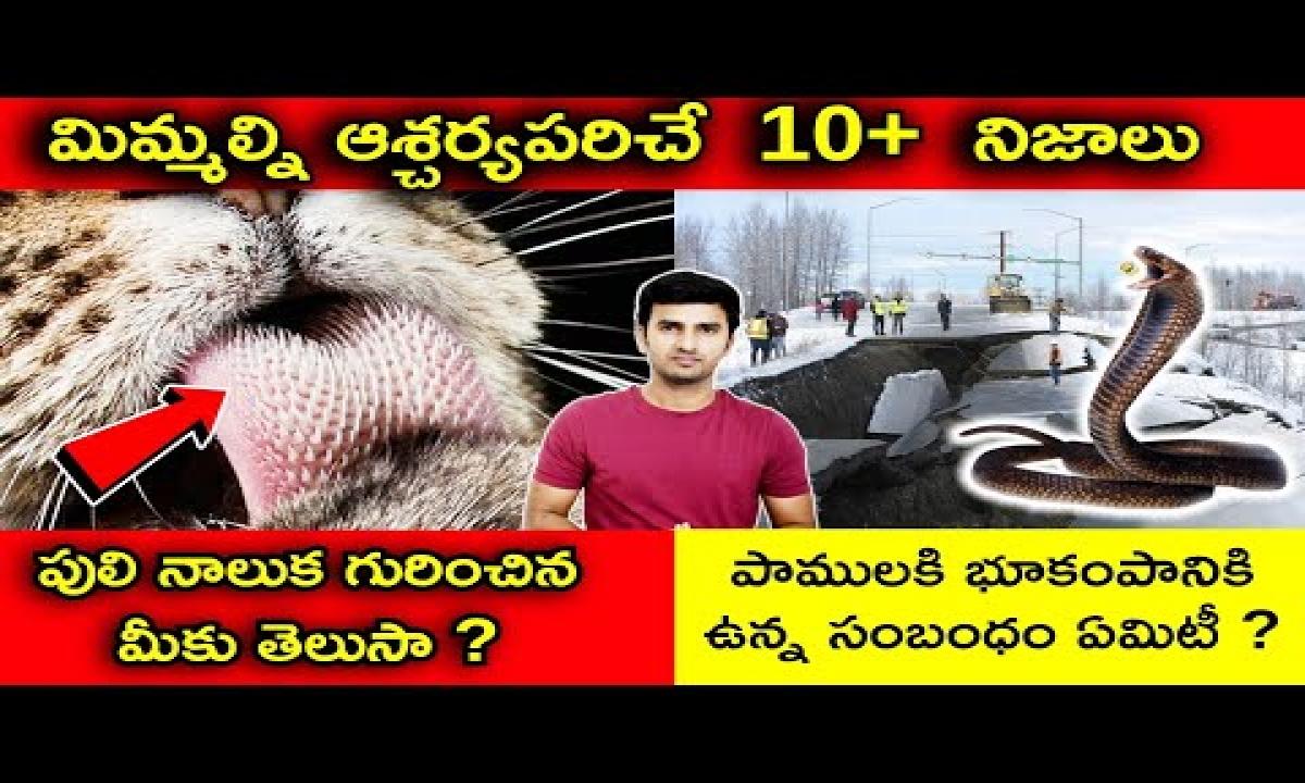 Top Unknown Interesting Facts In Telugu పాములకి భూకంపానికి ఉన్న సంబంధం ఏమిటీ TELUGU FACTS-Telugu Trending Viral Videos-Telugu Tollywood Photo Image-TeluguStop.com