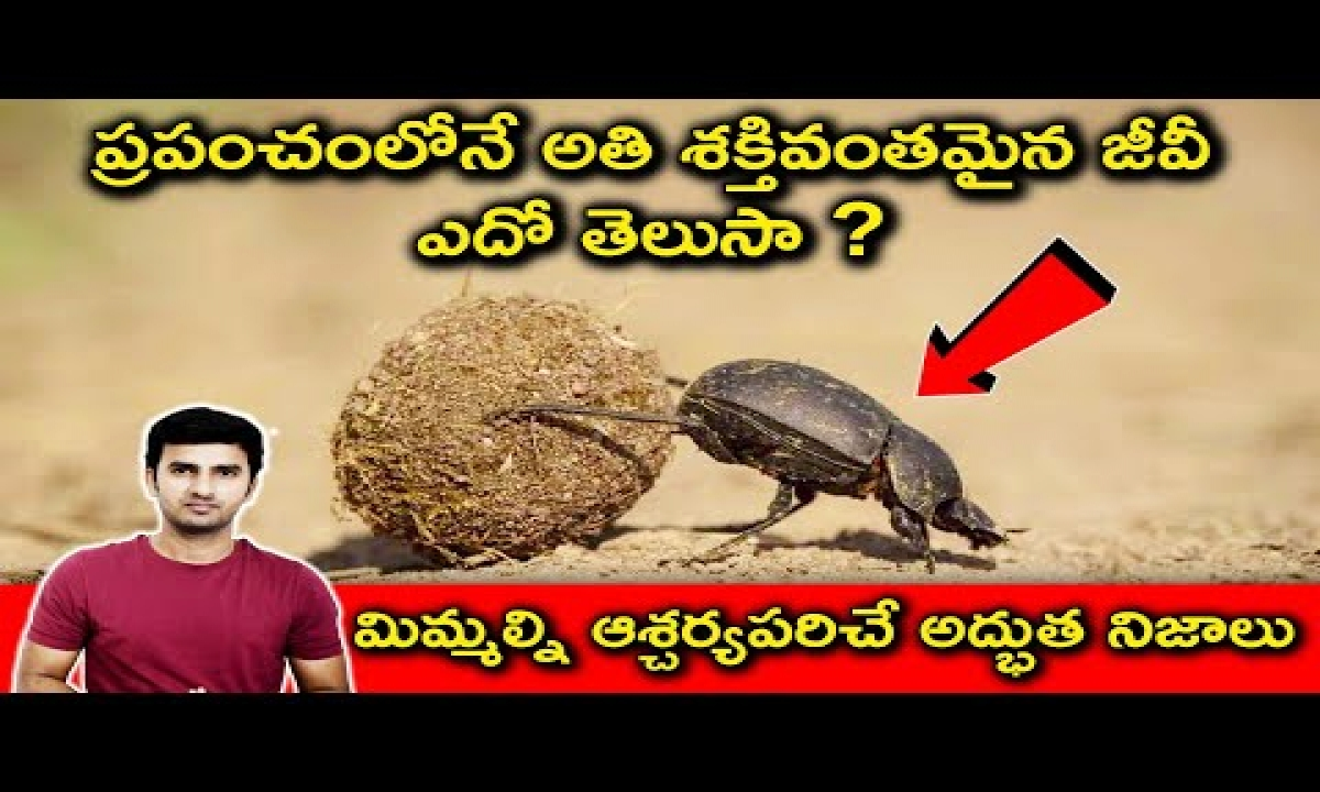 Top Interesting And Unknown Facts In Telugu   ప్రపంచంలోనే అతి శక్తివంతమైన జీవీ ఎదో తెలుసా ?-TeluguStop.com