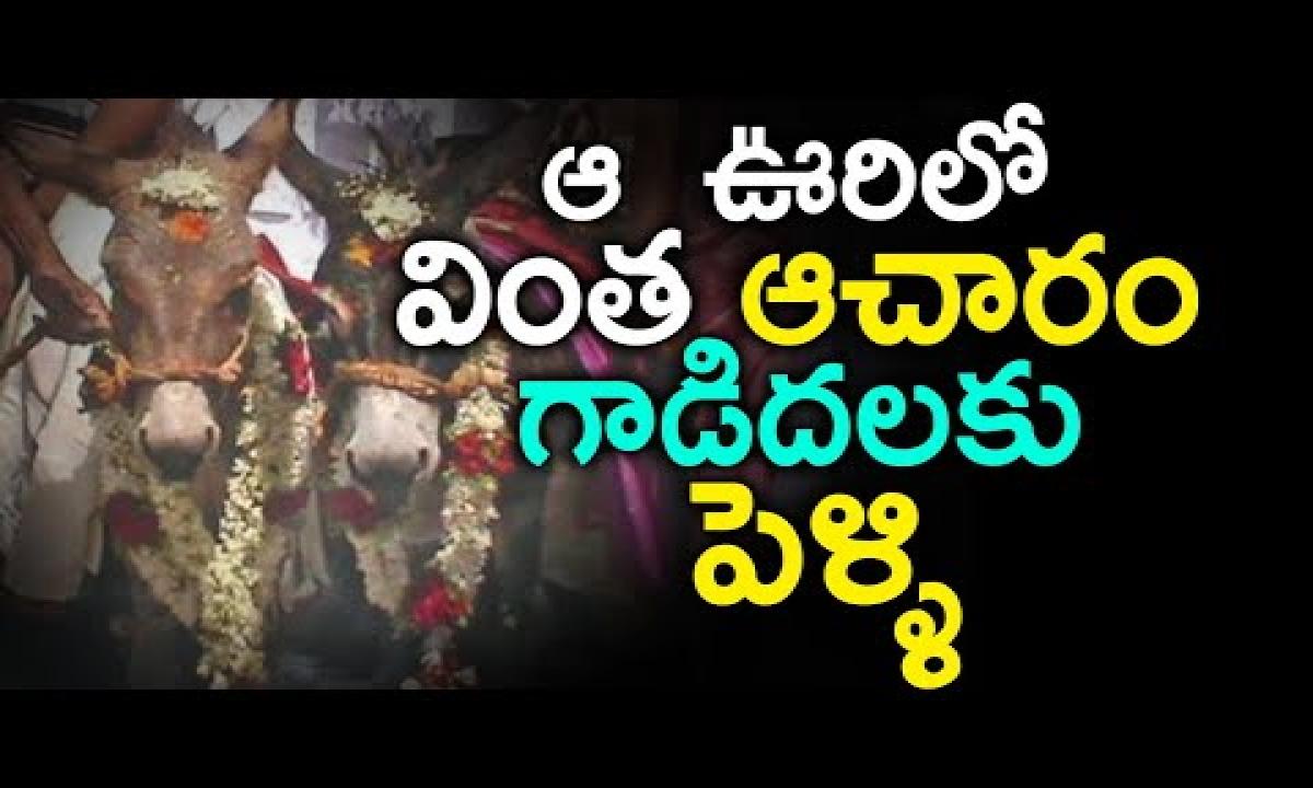 Variety Donkey Marriage At Hosur Kurnool   Farmers Perform Marriage With Donkeys   Telugu Stop  -TeluguStop.com