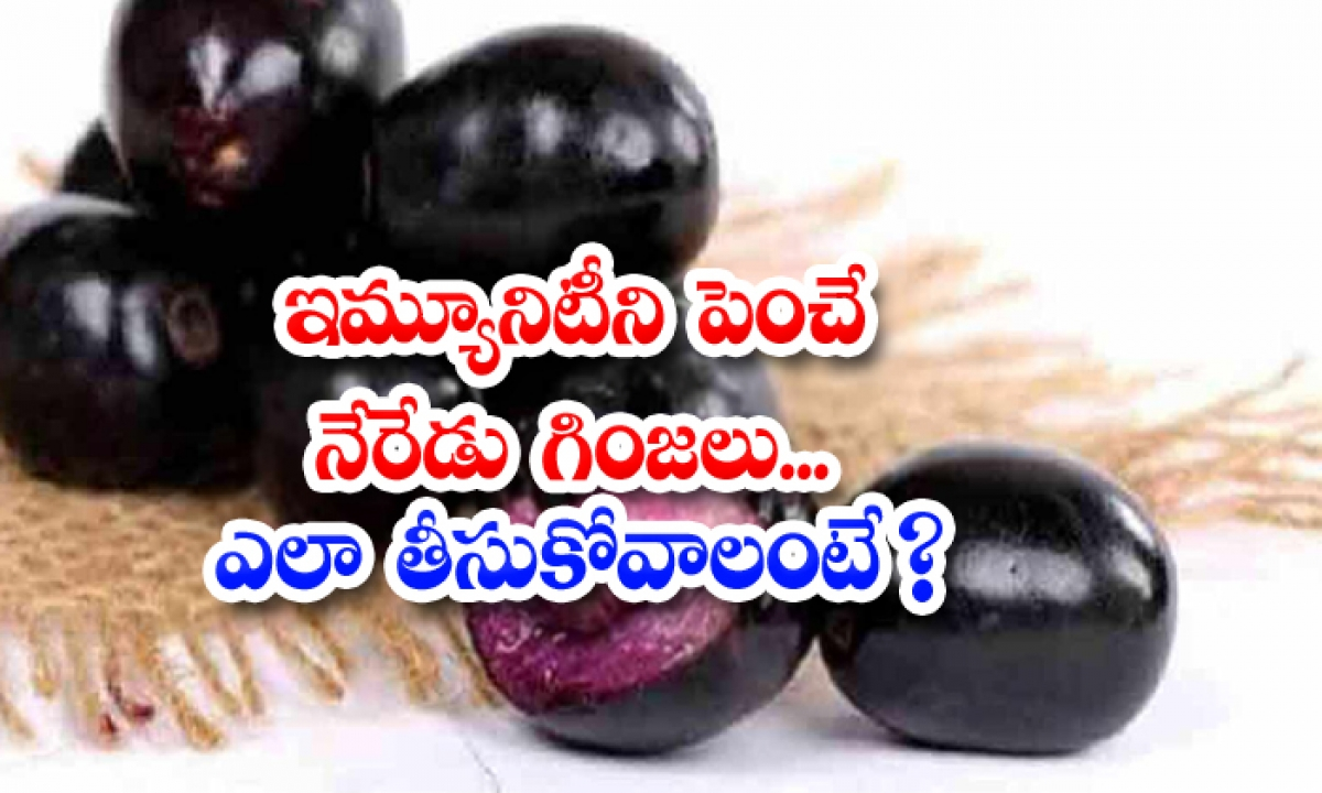 Jamun Seeds Help To Boosting Immune System-ఇమ్యూనిటీని పెంచే నేరేడు గింజలు..ఎలా తీసుకోవాలంటే-Latest News - Telugu-Telugu Tollywood Photo Image-TeluguStop.com