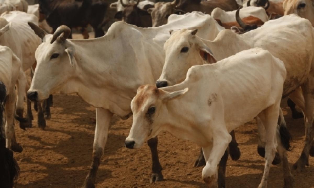 Keen On Promoting 'cow Factories' For Dairy Farming: Giriraj Singh-TeluguStop.com