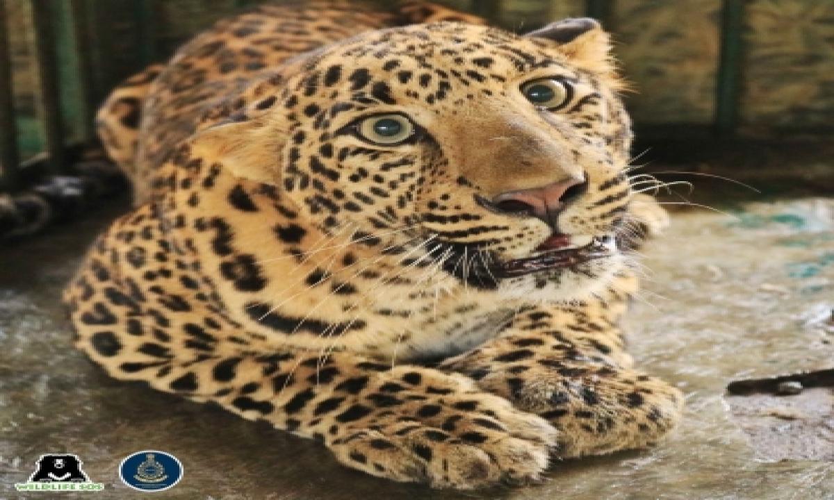TeluguStop.com - Leopard Electrocuted In Up