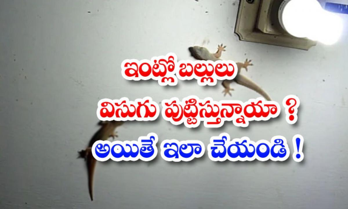 How To Remove Lizards From House-ఇంట్లో బల్లులు విసుగు పుట్టిస్తున్నాయా అయితే ఇలా చేయండి-Latest News - Telugu-Telugu Tollywood Photo Image-TeluguStop.com