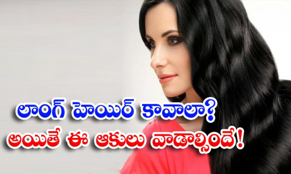 Long Hair Hair Care Hair Care Tips Hair Basil Leaves Tamarind-లాంగ్ హెయిర్ కావాలా అయితే ఈ ఆకులు వాడాల్సిందే-Latest News - Telugu-Telugu Tollywood Photo Image-TeluguStop.com