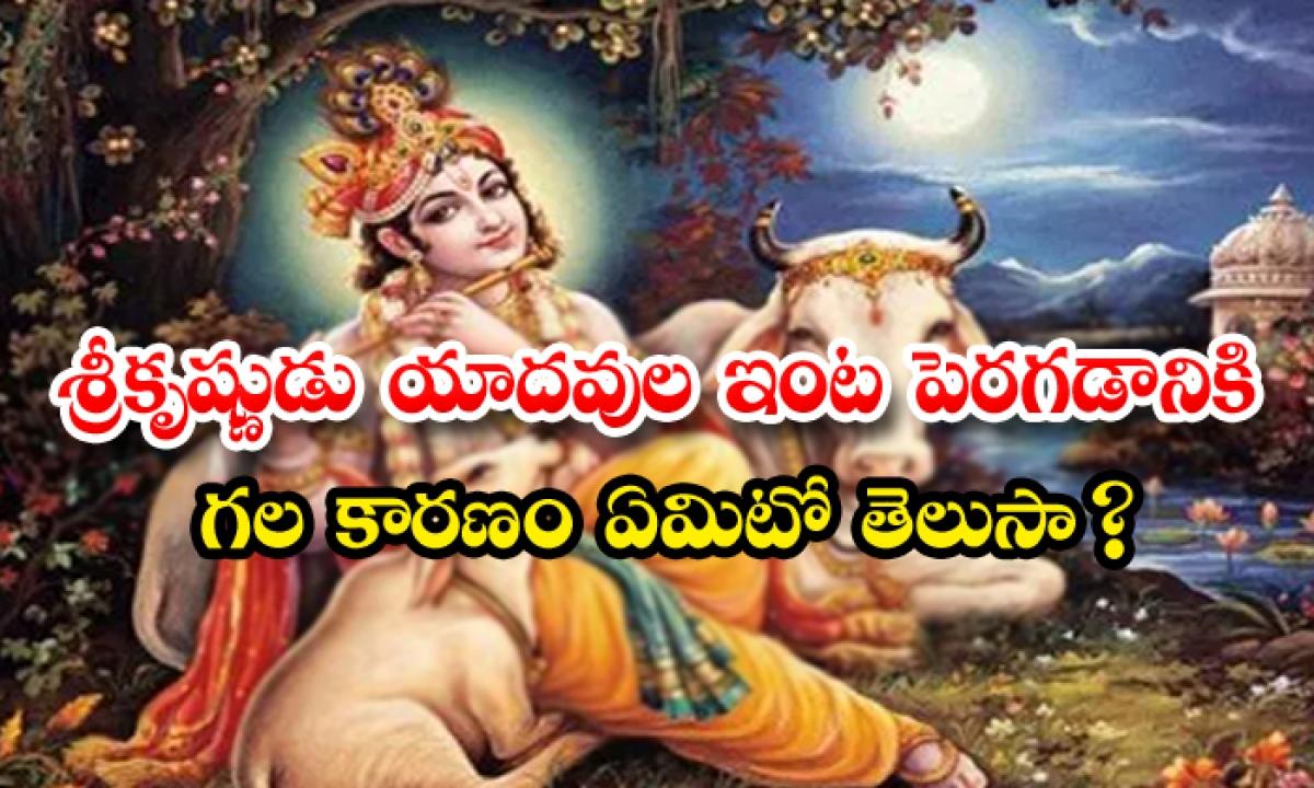 Do You Knowthe Reason Why Lord Krishna Grew Up In The House Of Yadavs-శ్రీకృష్ణుడు యాదవుల ఇంట పెరగడానికి గల కారణం ఏమిటో తెలుసా-Latest News - Telugu-Telugu Tollywood Photo Image-TeluguStop.com