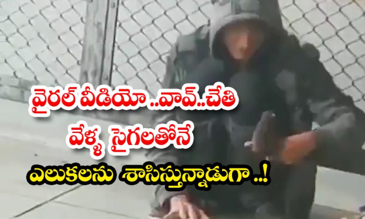 Man Control Rats And Dances Them With His Finger-వైరల్ వీడియో.. వావ్.. చేతి వేళ్ళ సైగలతోనే ఎలుకలను శాసిస్తున్నాడుగా..-General-Telugu-Telugu Tollywood Photo Image-TeluguStop.com