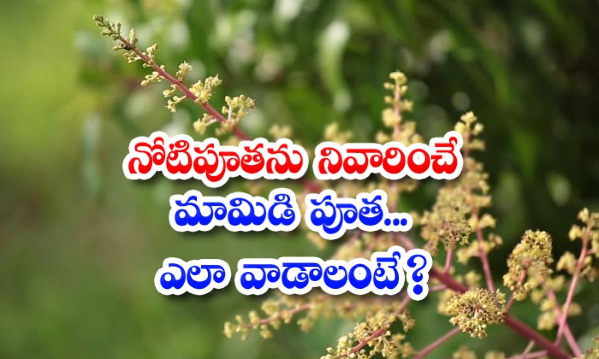 Mango Flowers Help To Reduce Mouth Ulcer-నోటిపూతను నివారించే మామిడి పూత..ఎలా వాడాలంటే-Latest News - Telugu-Telugu Tollywood Photo Image-TeluguStop.com