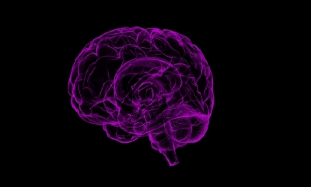 Modern Human Brain Originated 1.7 Mn Years Ago In Africa-TeluguStop.com