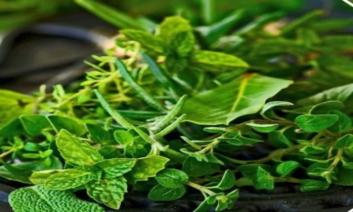 Modi Praises Odisha's Patayat Sahu For Creating Medicinal Plant Garden-TeluguStop.com