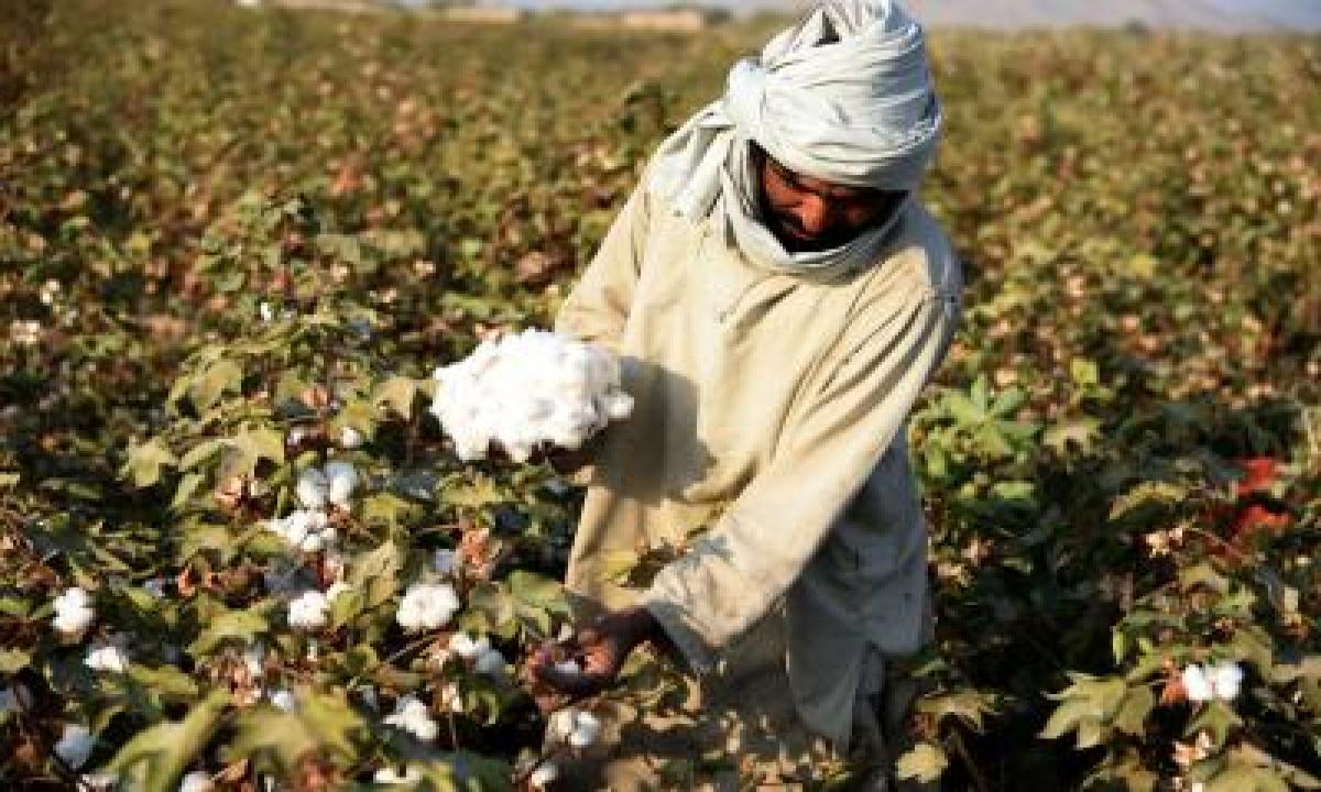 Monsanto Officials Were On Snoop List As Maharashtra Set Up Probe For Bt Cotton-TeluguStop.com