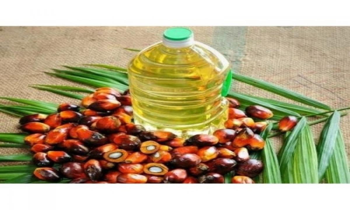 Oil Seeds Production Target Not Met In Last 3 Years-TeluguStop.com