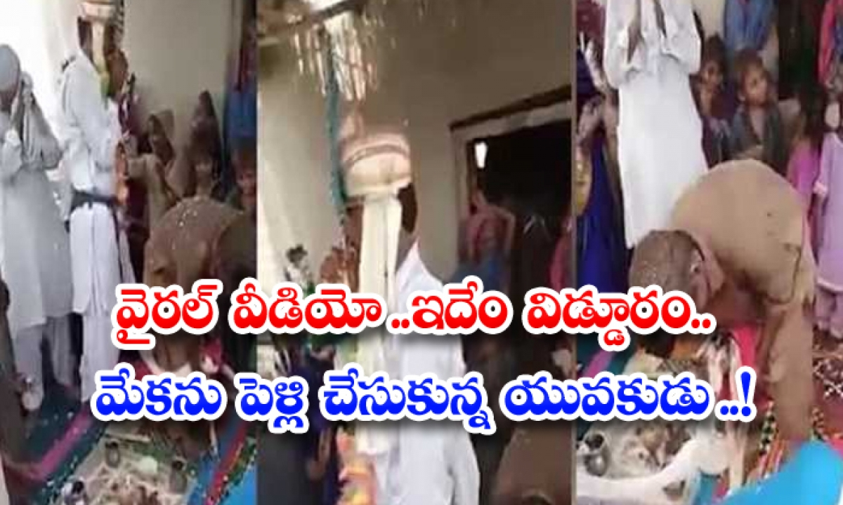 Video Of Man Gets Marriage With Goat Goes Viral-వైరల్ వీడియో.. ఇదేం విడ్డూరం.. మేకను పెళ్లి చేసుకున్న యువకుడు..-General-Telugu-Telugu Tollywood Photo Image-TeluguStop.com