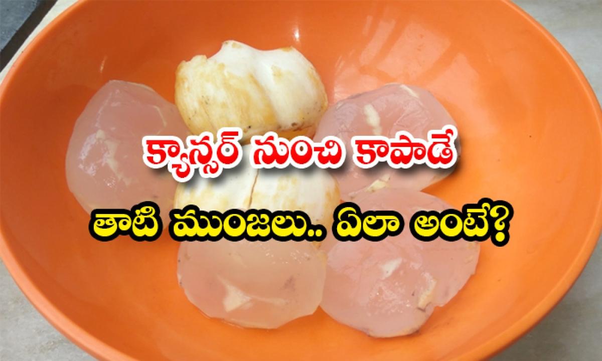 Palmyra Fruit To Protect Against Cancer-క్యాన్సర్ నుంచి కాపాడే తాటి ముంజలు.. ఏలా అంటే-Latest News - Telugu-Telugu Tollywood Photo Image-TeluguStop.com