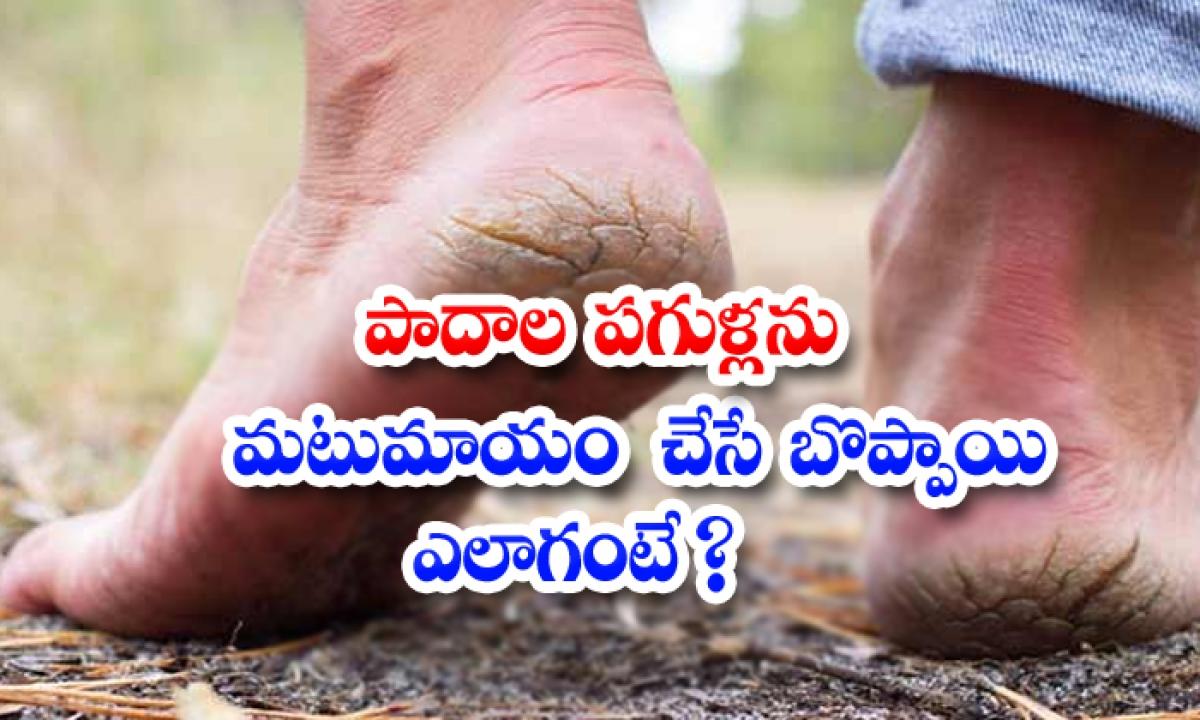 Papaya Helps To Get Rid Of Cracked Heels-పాదాల పగుళ్లను మటుమాయం చేసే బొప్పాయి..ఎలాగంటే-Latest News - Telugu-Telugu Tollywood Photo Image-TeluguStop.com