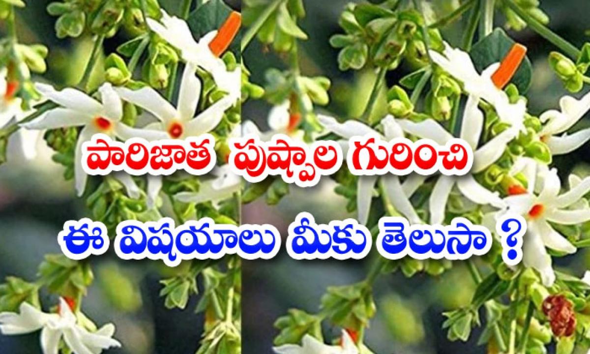 Best Unknown Benefits Of Parijata Plant-పారిజాత పుష్పాలు గురించి ఈ విషయాలు మీకు తెలుసా-Latest News - Telugu-Telugu Tollywood Photo Image-TeluguStop.com