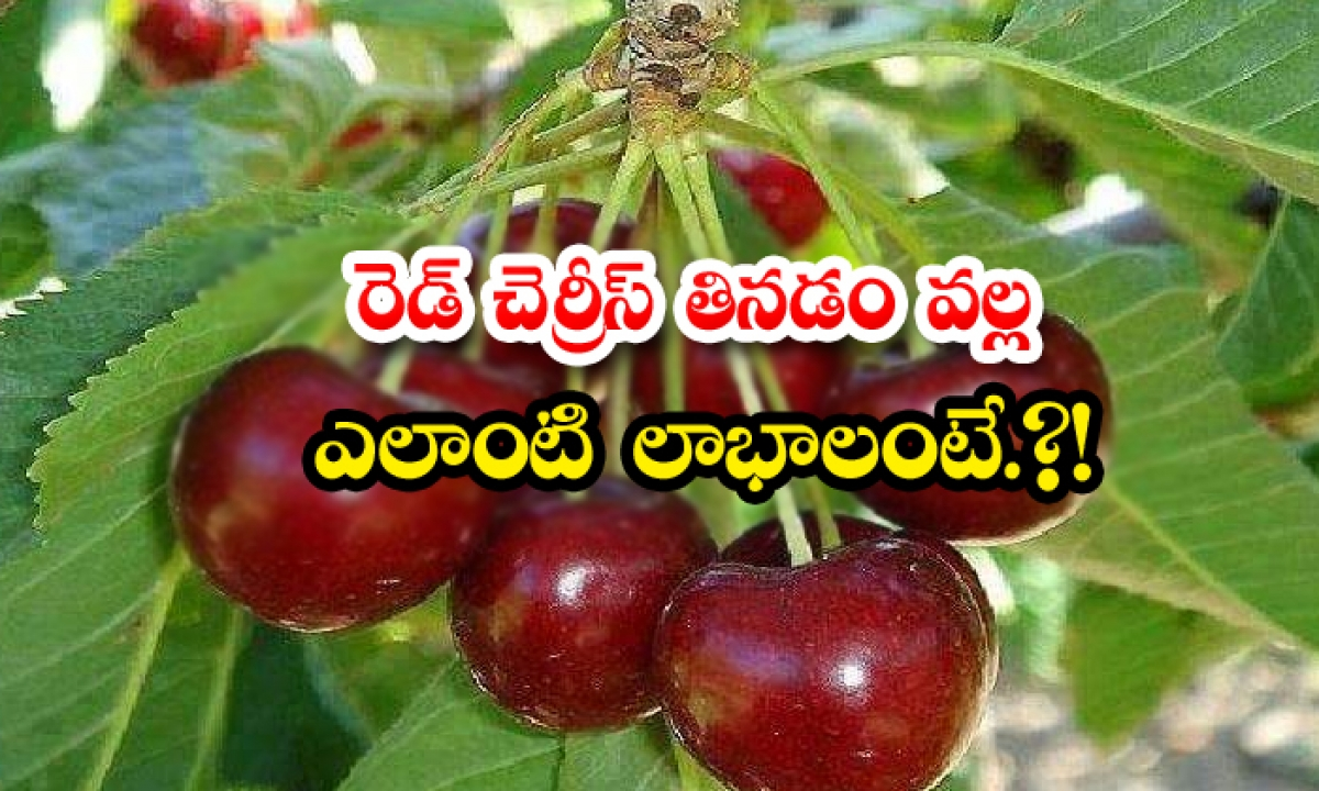 What Are The Benefits Of Eating Red Cherries-TeluguStop.com