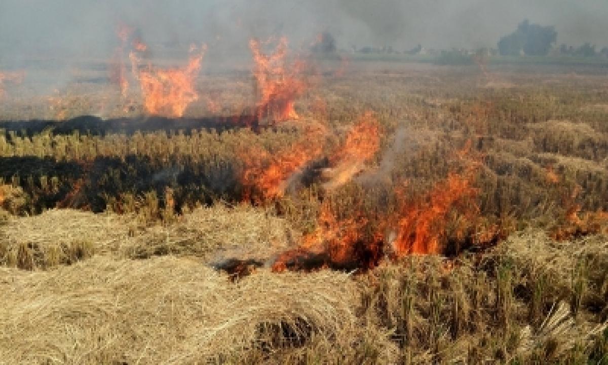 Punjab Appoints 8,500 Nodal Officers To Monitor Stubble Burning-Environment/Wildlife News-Telugu Tollywood Photo Image-TeluguStop.com