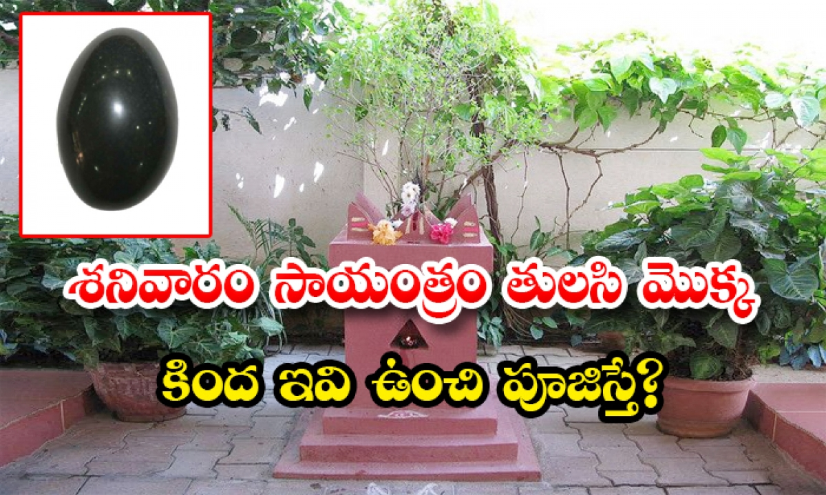 Put Shaligram Stone Under Tulasi Plant To Drive Off Poverty-శనివారం సాయంత్రం తులసి మొక్క కింద ఇవి ఉంచి పూజిస్తే-Latest News - Telugu-Telugu Tollywood Photo Image-TeluguStop.com