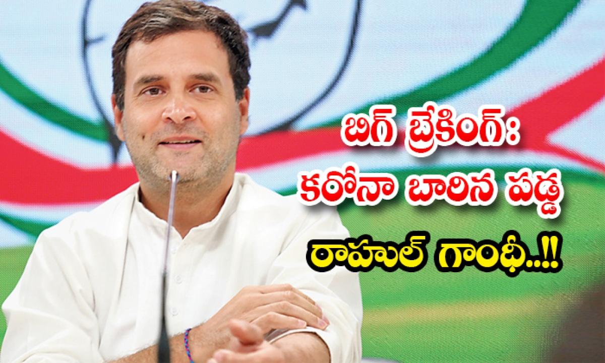 Rahul Gandhi Infected With Corona Positive-బిగ్ బ్రేకింగ్: కరోనా బారిన పడ్డ రాహుల్ గాంధీ..-General-Telugu-Telugu Tollywood Photo Image-TeluguStop.com