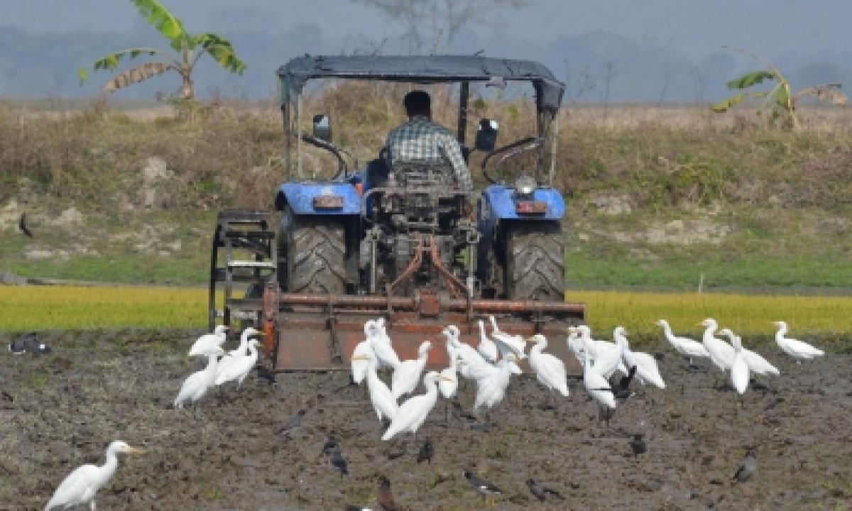 Reconfigure Agricultural Producer Support: Un Report-TeluguStop.com