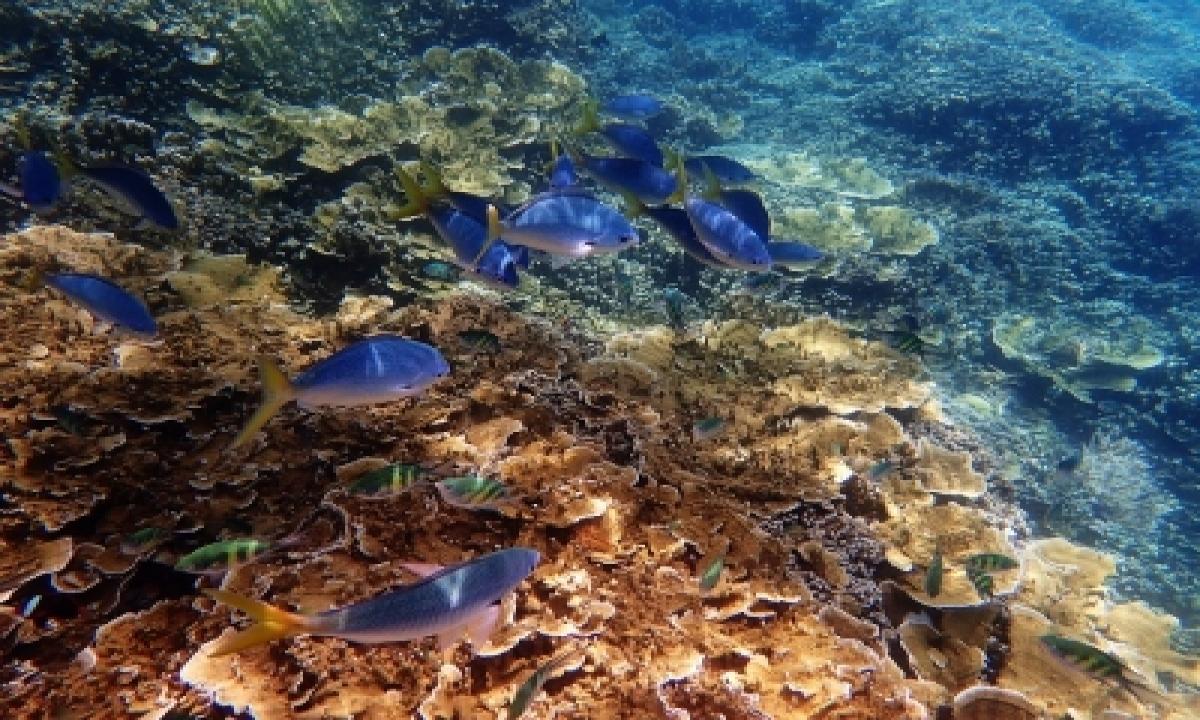 Research Shows How Plastics Threaten Marine Biodiversity – Delhi   India News   National,environment/wildlife,deep Dive-TeluguStop.com