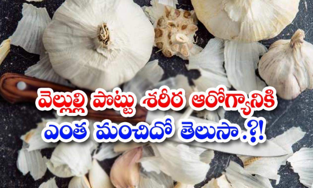 Do You Know How Good Garlic Peel Is For Body Health-వెల్లుల్లి పొట్టు శరీర ఆరోగ్యానికి ఎంత మంచిదో తెలుసా.-Latest News - Telugu-Telugu Tollywood Photo Image-TeluguStop.com