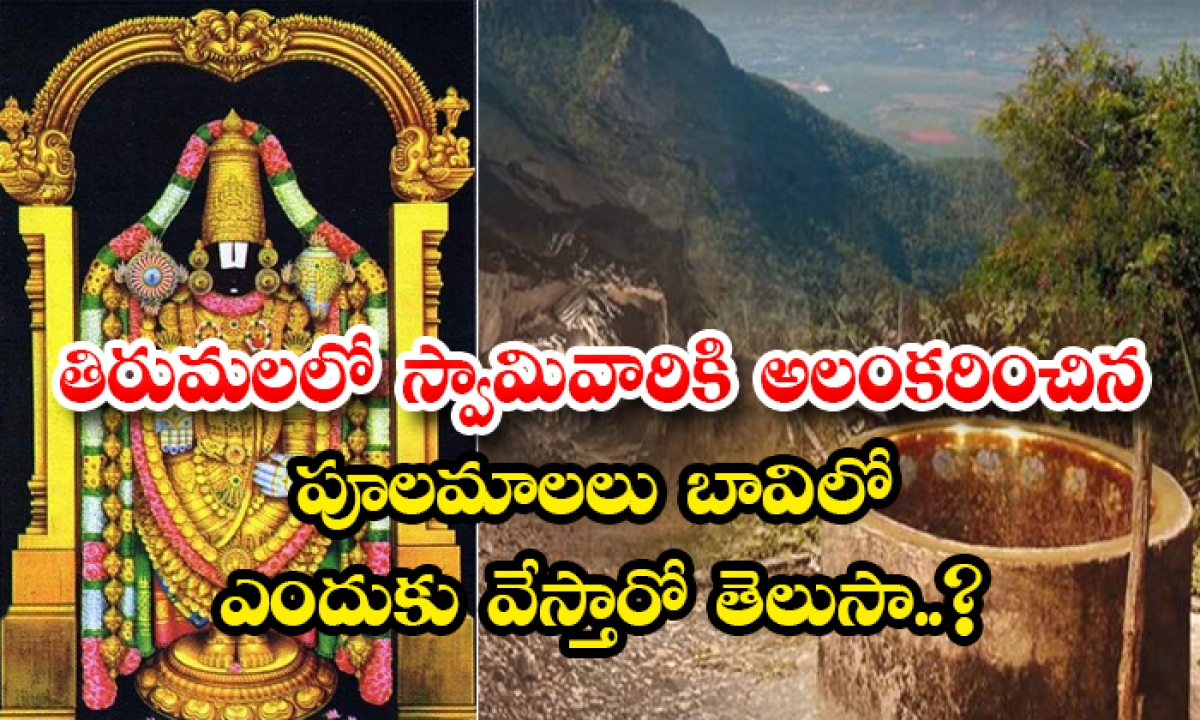 The Secret Of Tirumala Flowers Well-తిరుమలలో స్వామివారికి అలంకరించిన పూలమాలలు బావిలో ఎందుకు వేస్తారో తెలుసా..-Latest News - Telugu-Telugu Tollywood Photo Image-TeluguStop.com