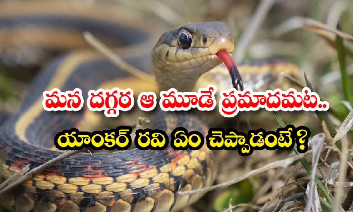 Shocking Facts Explained By Friends Of Snakes Society-మన దగ్గర ఆ మూడే ప్రమాదమట.. యాంకర్ రవి ఏం చెప్పాడంటే -General-Telugu-Telugu Tollywood Photo Image-TeluguStop.com