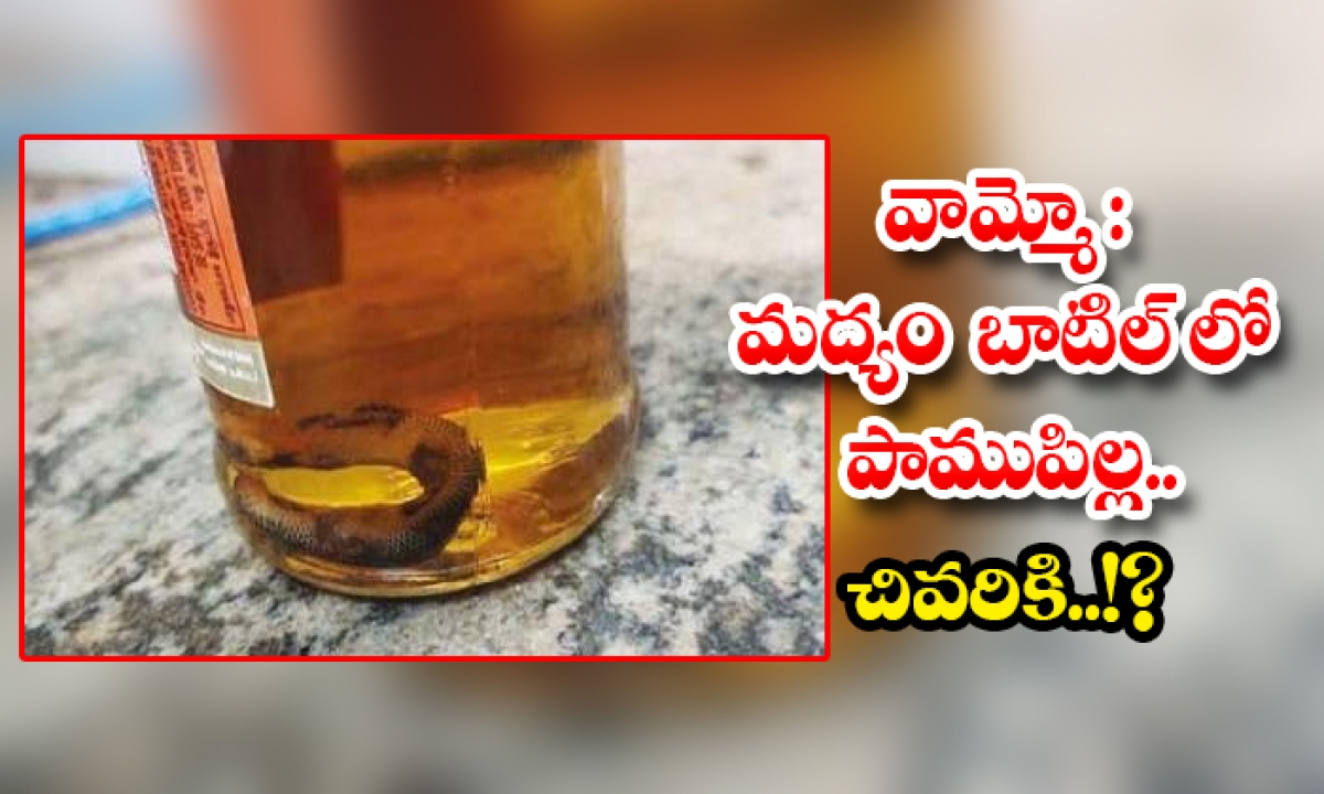 Snake Found In Liquor Bottle In Tamilnadu-TeluguStop.com