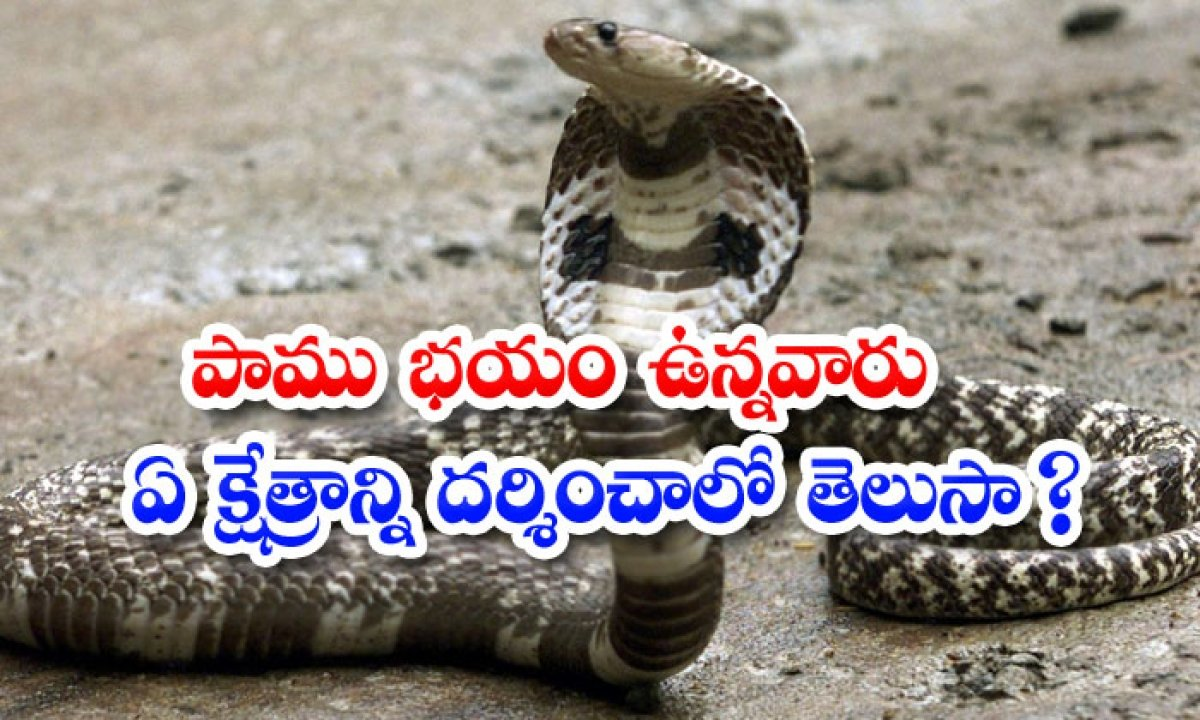 A Place To Visit For Those Who Are Afraid Of Snakes-పాము భయం ఉన్నవారు ఏ క్షేత్రాన్ని దర్శించాలో తెలుసా-Latest News - Telugu-Telugu Tollywood Photo Image-TeluguStop.com