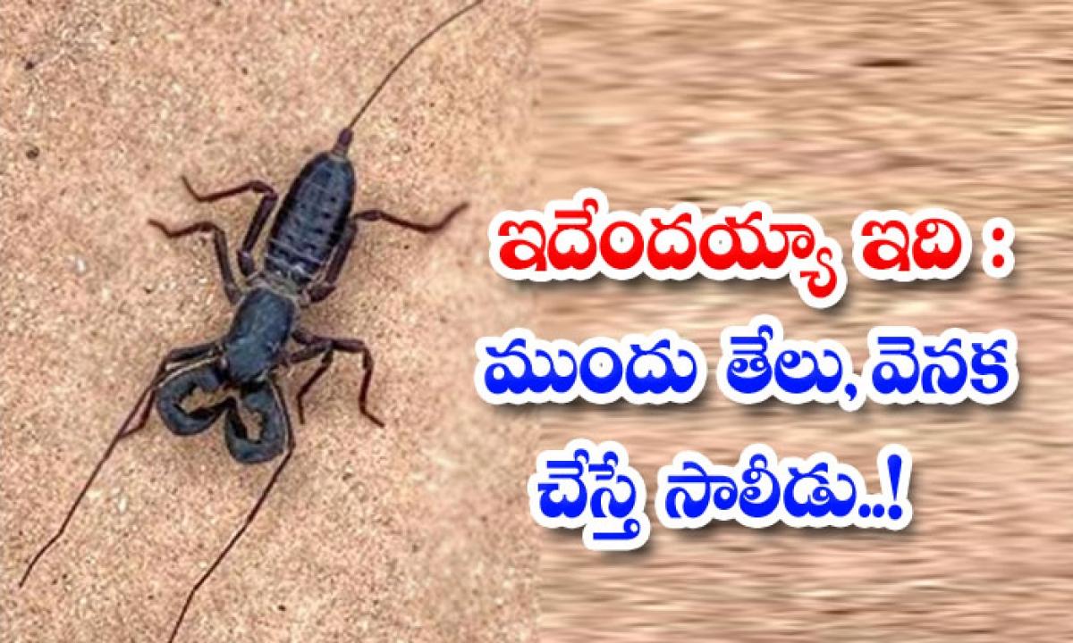 Is This It A Scorpion In Front A Spider In The Back-ఇదేందయ్యా ఇది: ముందు తేలు, వెనక చూస్తే సాలీడు..-General-Telugu-Telugu Tollywood Photo Image-TeluguStop.com