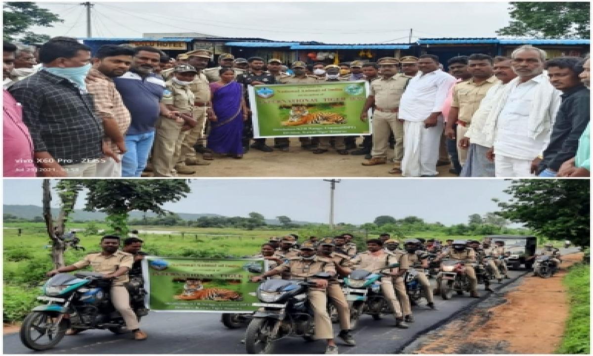 Steady Increase In Number Of Tigers In Telangana-Environment/Wildlife News-Telugu Tollywood Photo Image-TeluguStop.com