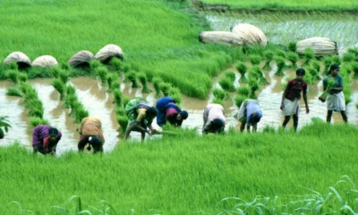 'steps Taken To Ensure Fertiliser Availability In Kharif 2021'-TeluguStop.com