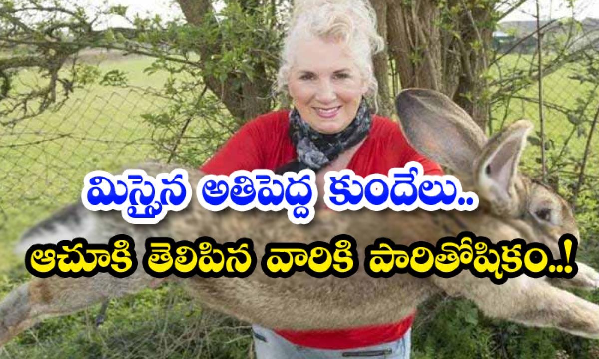 World Biggest Rabbit Stolen In England-TeluguStop.com