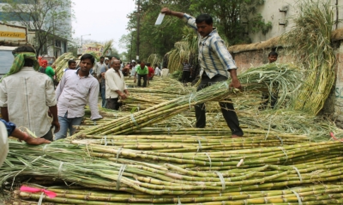 Sugarcane Output Per Hectare Rises In Up-TeluguStop.com