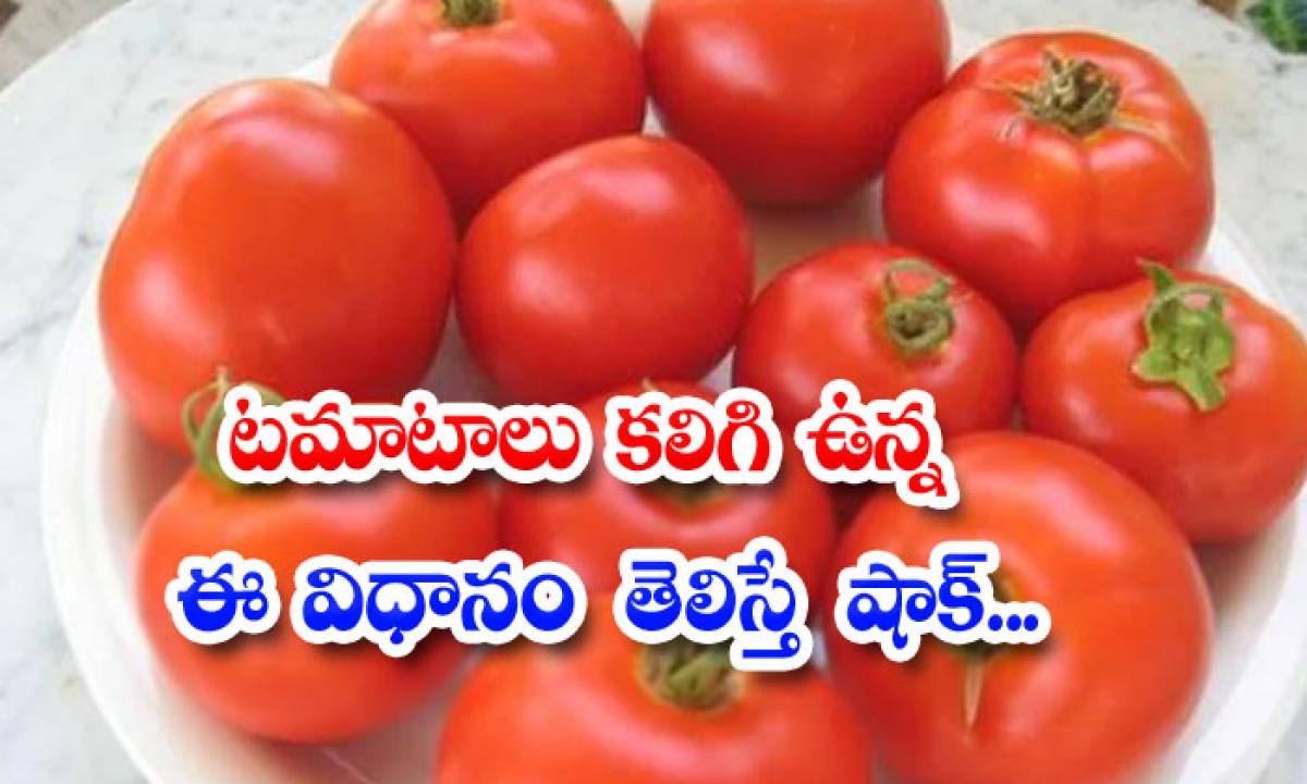 Shock To Know About This Method Of Having Tomatoes-టమాటలు కలిగి ఉన్న ఈ విధానం గురించి తెలిస్తే షాక్…-General-Telugu-Telugu Tollywood Photo Image-TeluguStop.com