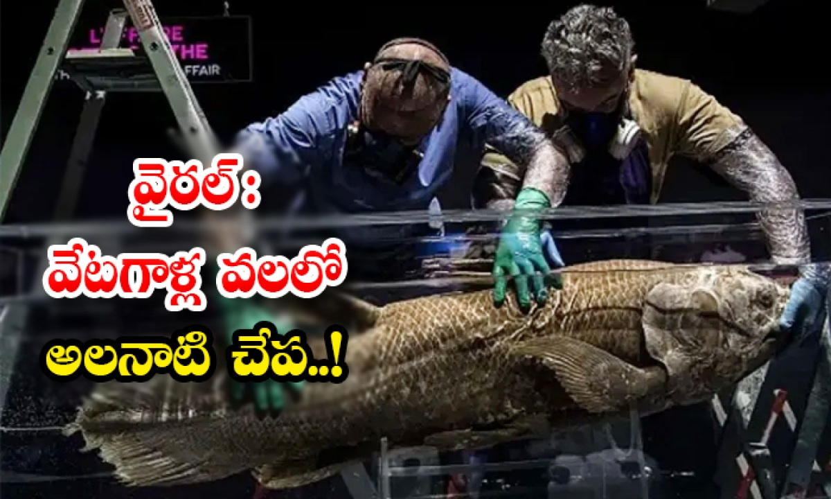 Viral Fishermen Caught Dinosaur Period Coelacanth Fish Near Madagascar-వైరల్: వేటగాళ్ల వలలో అలనాటి చేప..-General-Telugu-Telugu Tollywood Photo Image-TeluguStop.com