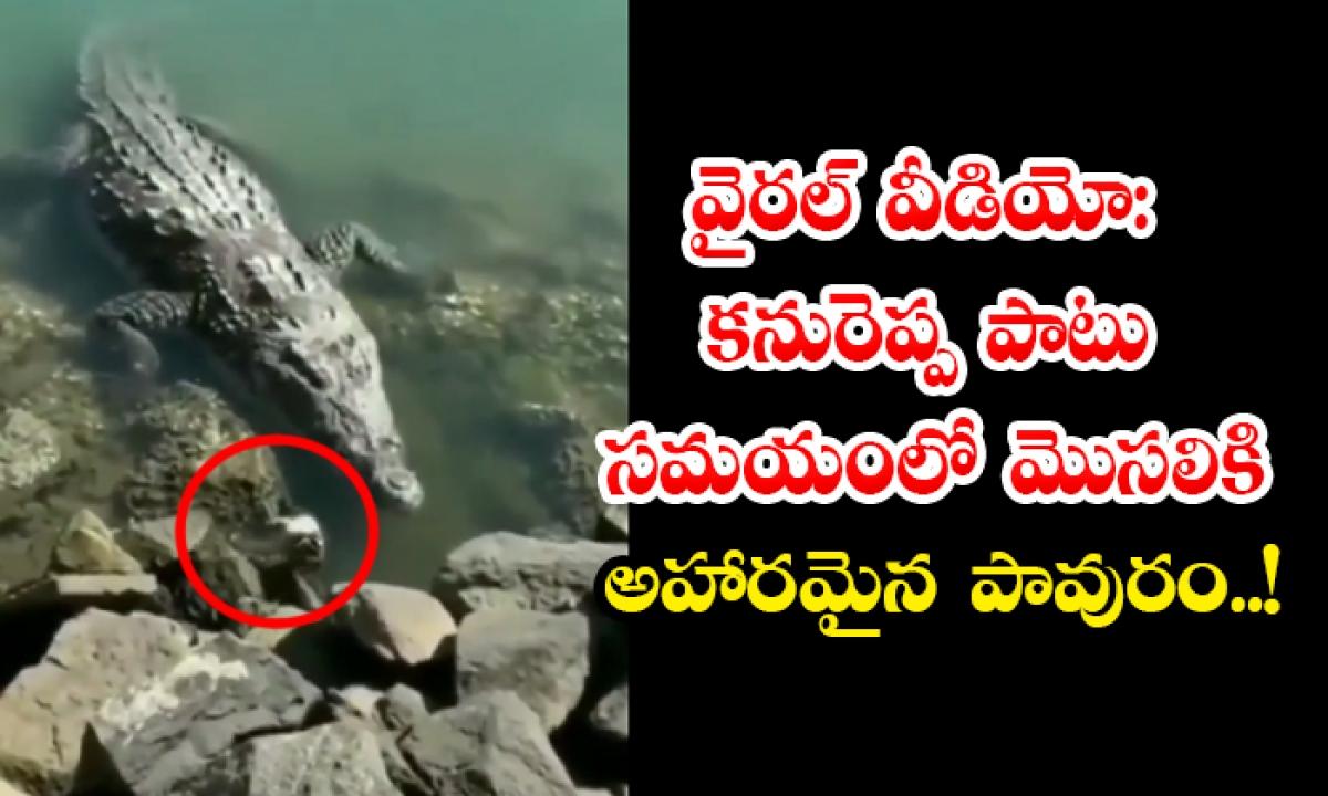 Viral Video A Pigeon Has Become Food For A Crocodile In Fraction Of Seconds-వైరల్ వీడియో: కనురెప్ప పాటు సమయంలో మొసలికి అహారమైన పావురం..-General-Telugu-Telugu Tollywood Photo Image-TeluguStop.com