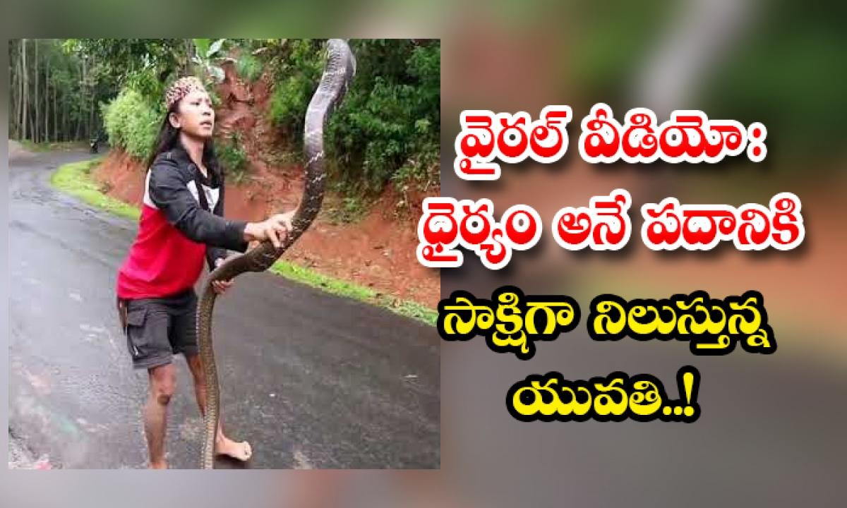 The Viral Video A Woman Shows Courage In Catching The King Cobra-వైరల్ వీడియో: ధైర్యం అనే పదానికి సాక్షిగా నిలుస్తున్న యువతి..-General-Telugu-Telugu Tollywood Photo Image-TeluguStop.com