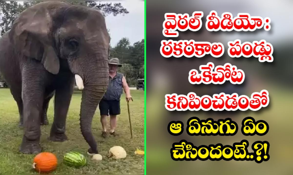 Viral Video African Elephant Bubbles Enjoys Eating Different Fruits-వైరల్ వీడియో: రకరకాల పండ్లు ఒకేచోట కనిపించడంతో ఆ ఏనుగు ఏం చేసిందంటే..-General-Telugu-Telugu Tollywood Photo Image-TeluguStop.com