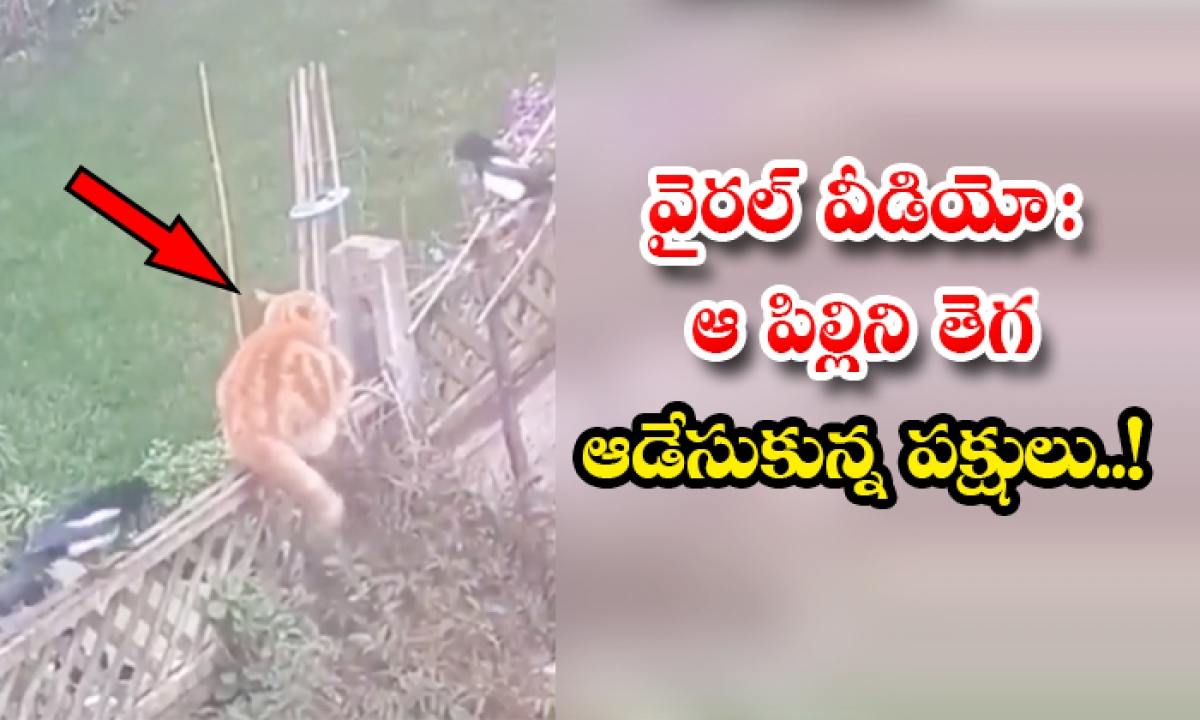 Viral Video Birds Fight With The Cat Attacked On Birds Nest-వైరల్ వీడియో: ఆ పిల్లిని తెగ ఆడేసుకున్న పక్షులు..-General-Telugu-Telugu Tollywood Photo Image-TeluguStop.com