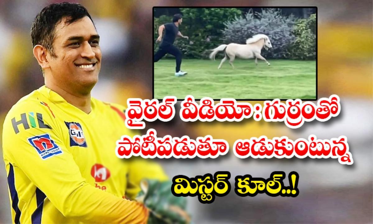 Viral Video Cricketer Ms Dhoni Having Fun With Horse In Farm House-వైరల్ వీడియో: గుర్రంతో పోటీపడుతూ ఆడుకుంటున్న మిస్టర్ కూల్..-General-Telugu-Telugu Tollywood Photo Image-TeluguStop.com