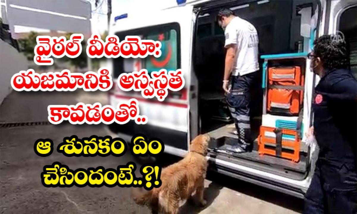 Viral Video Dog Follows Owner In Ambulance In Turkey-వైరల్ వీడియో: యజమానికి అస్వస్థత కావడంతో.. ఆ శునకం ఏం చేసిందంటే..-General-Telugu-Telugu Tollywood Photo Image-TeluguStop.com